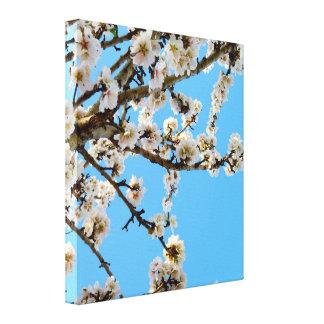 Lienzo Flor blanco de la primavera en árbol,