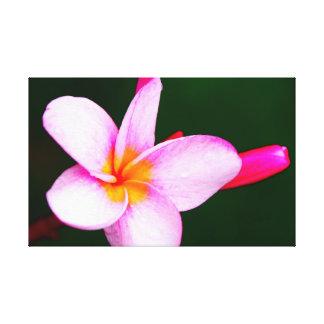 Lienzo Flor del Frangipani