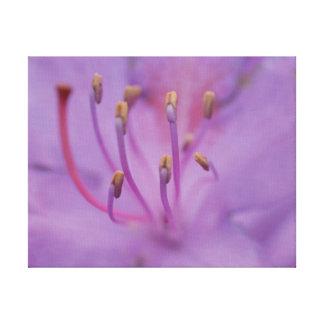 Lienzo Flor hermosa de la púrpura de la foto del primer
