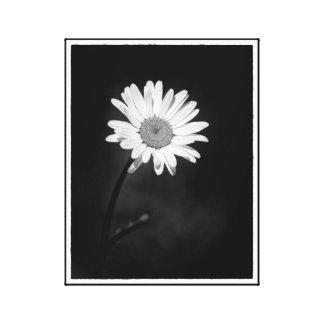 Lienzo Flor minimalista dramática blanco y negro de la