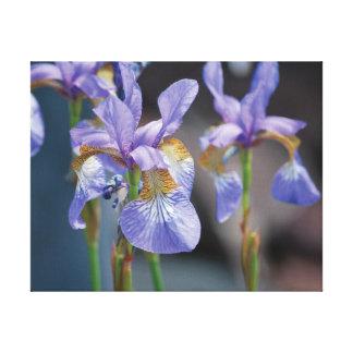 Lienzo Flor púrpura de la foto hermosa del primer en azul