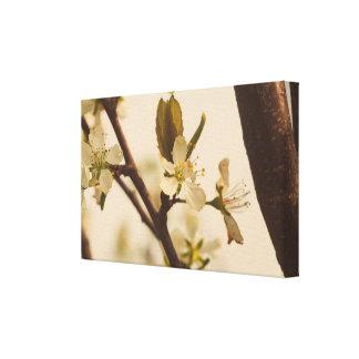 Lienzo Flores del cerezo