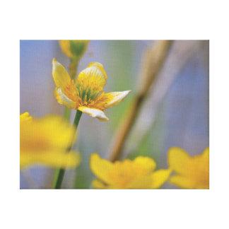 Lienzo Flores hermosas del amarillo de la foto del primer