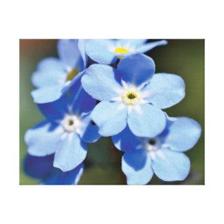 Lienzo Flores hermosas del azul de la foto del primer