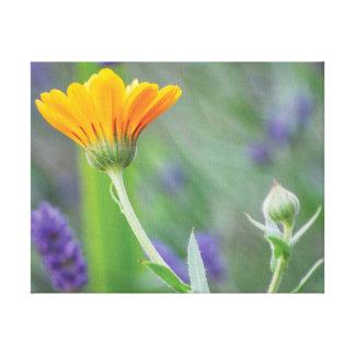 Lienzo Flores hermosas del naranja y de la púrpura de la