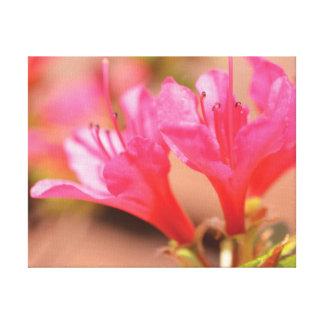 Lienzo Flores hermosas del rosa de la foto del primer