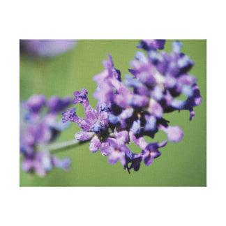 Lienzo Flores púrpuras de la lavanda de la foto hermosa