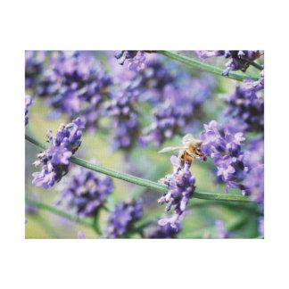 Lienzo Flores y abeja púrpuras de la lavanda de la foto