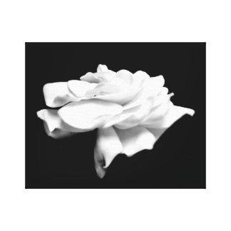Lienzo Fondo blanco del negro del jardín