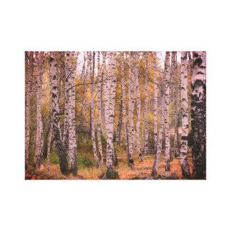 Lienzo Foto del otoño de Forrest del abedul sola