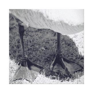 Lienzo Fotografía de los gansos de la naturaleza de la