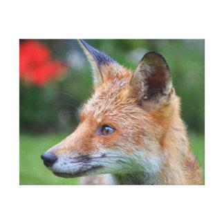 Lienzo Fotografía hermosa del primer del zorro en jardín