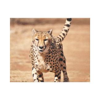 Lienzo funcionamiento del guepardo