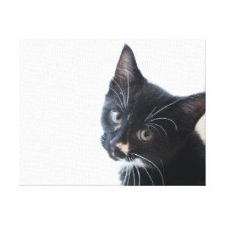 Lienzo Gatito blanco y negro