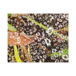 Lienzo Gotitas de agua en una tela