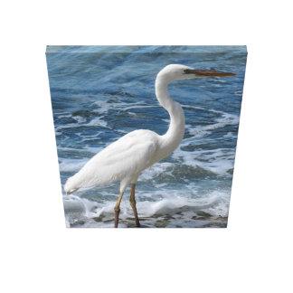 Lienzo Gran Egret blanco en la caza en resaca