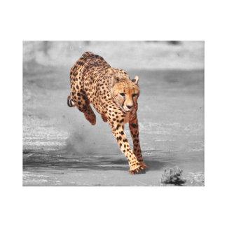 Lienzo guepardo corriente