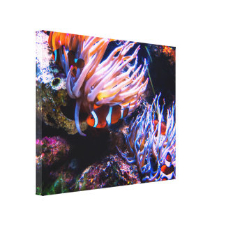 Lienzo Hábitat de Clownfishes