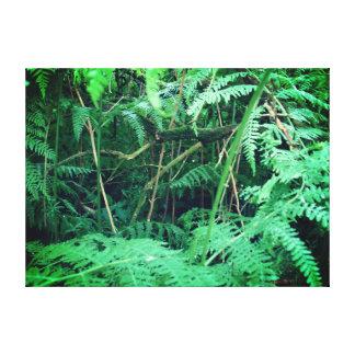 Lienzo Helechos del bosque en Sherwood