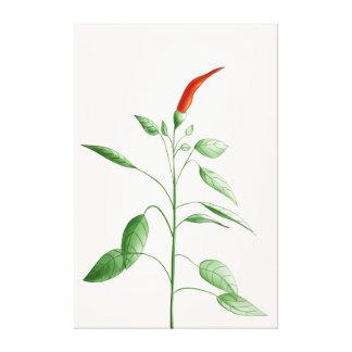 Lienzo Ilustracion botánico de la planta de la pimienta