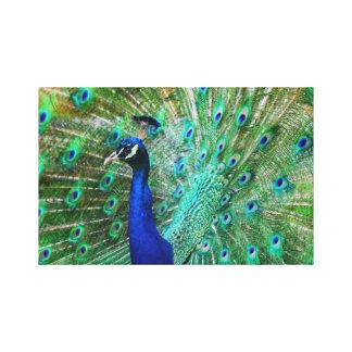 Lienzo Imagen impresionante del pavo real