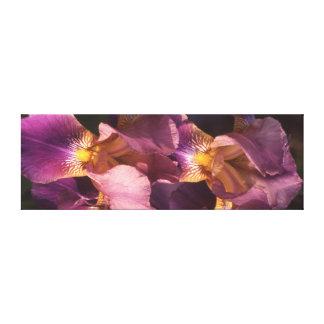 Lienzo Iris holandés barbudo de la lavanda y del oro