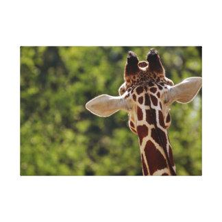 Lienzo La jirafa que escucha detras de las puertas