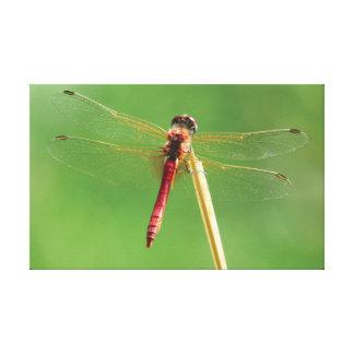 Lienzo La libélula