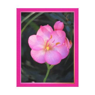 Lienzo Lámina - Flor Rosa del en de Arte Lona Envuelta Para Galerías