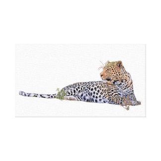 Lienzo Leopardo que se acuesta
