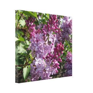 Lienzo Lilas púrpuras de Ohio en primavera