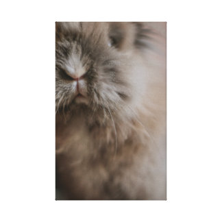 Lienzo Little Bunny - Pancake