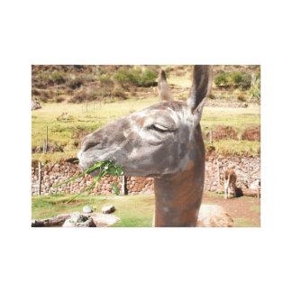 Lienzo Llama