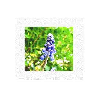 Lienzo Lona azul de la flor - jacinto de uva