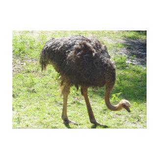 Lienzo Lona de la avestruz