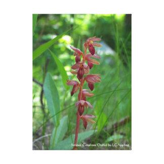 """Lienzo Lona rayada 16"""" de la orquídea de Coralroot x 20"""""""
