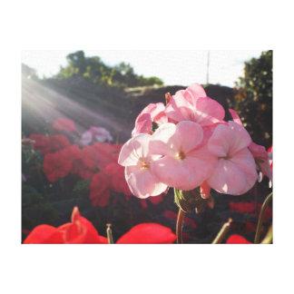 Lienzo Lona - rayo de sol en rosa
