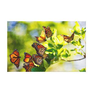 Lienzo Lugar de descanso de la mariposa de monarca