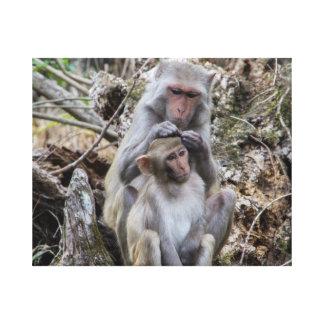 Lienzo Macacos de la India