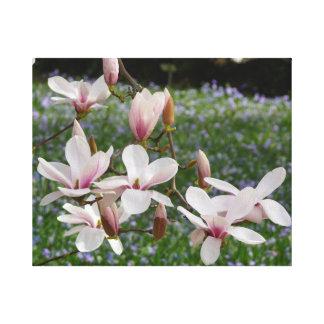 Lienzo Magnolia rosada floreciente (Tulpenbaum) 03