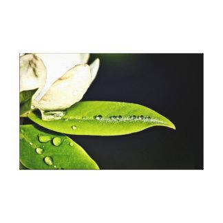 Lienzo Magnolia y gotas de agua