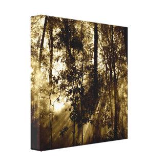 Lienzo Mañana en bosque