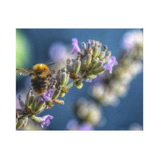 Lienzo Manosee la abeja que se sienta en la lavanda con