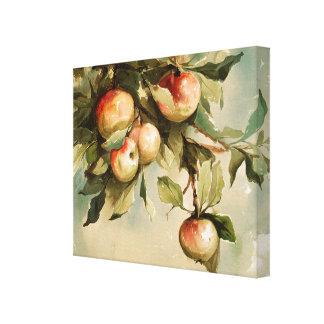 Lienzo Manzanas en una rama