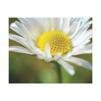 Lienzo Margarita blanca de la foto hermosa del primer