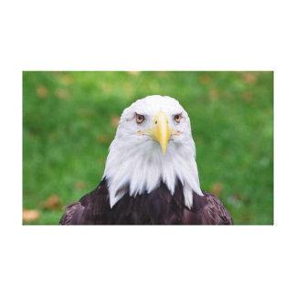 Lienzo Ojos de Eagle