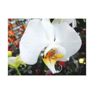 Lienzo Orquídea blanca hermosa del Phalaenopsis