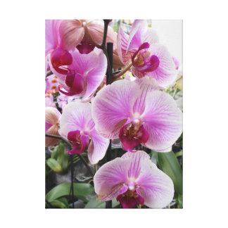 Lienzo Orquídeas de polilla rosadas