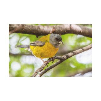 Lienzo Pájaro amarillo