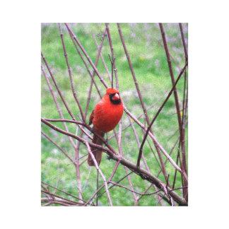 Lienzo Pájaro cardinal rojo